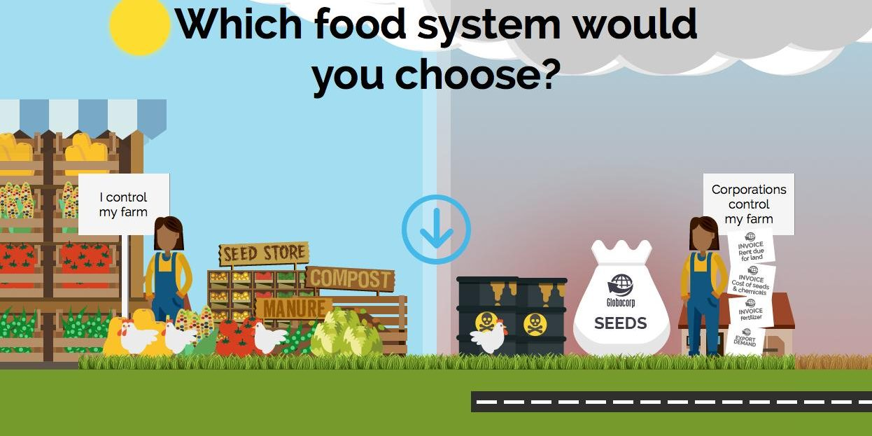 Food System Info Graphic