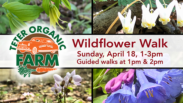 Wildflower Walk | 2021 web-d