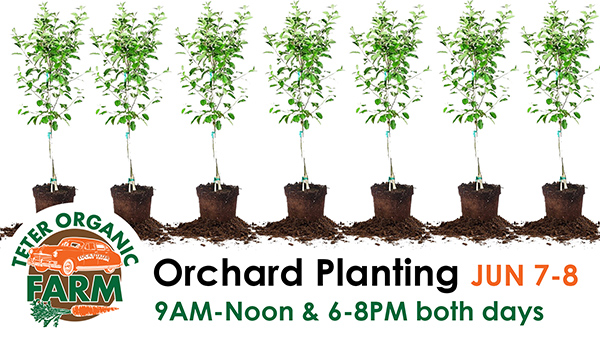 Orchard Planting times web